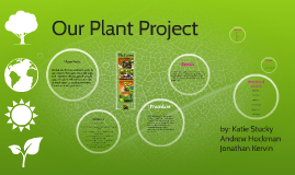 Copy of Ecybermission plant project