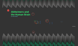 Alzheimer's & the Human Brain