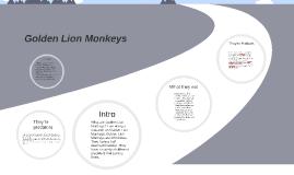 Golden Lion Monkeys