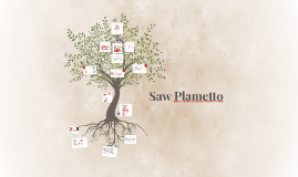 Copy of Saw Plametto