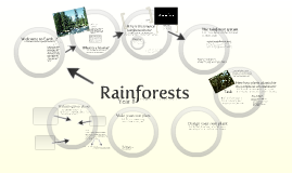 Year 8: Rainforests