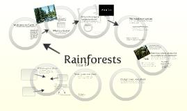 Year 8: Rainforests