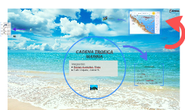 Copy of CADENA TROFICA MARINA