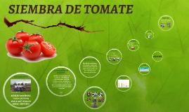 SIEMBRA DE TOMATE