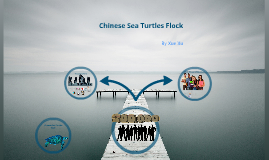 Chinese Sea Turtles Flock