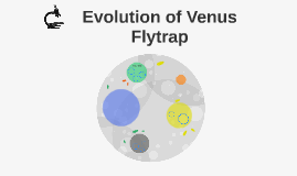 Evolution of Venus Flytrap
