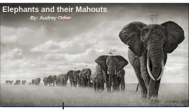Copy of Elephants and their Mahouts