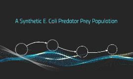 A Synthetic E. Coli Predator Prey Population