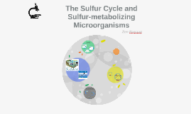 CRE220 - The Sulfur Cycle and Sulfur-metabolizing Microorganisms