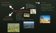 Red Tropical Savanna