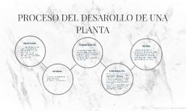 PROCESO DEL DESAROLLO DE UNA PLANTA