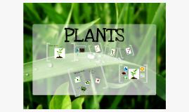 Copy of plant 2