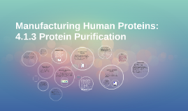 Copy of Manufacturing Human Proteins: 4.1.3 Protein Purification