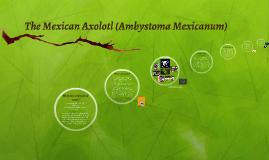 Copy of The Mexican Axolotl (Ambystoma mexicanum)