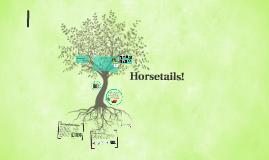Horsetails!