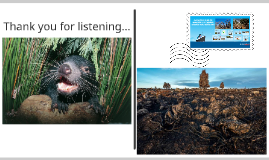 Environmental Change and Management in the Tasmanian Wildern