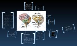 Copy of CMY 331: The Adolescent Brain Part 1