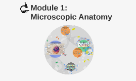 Module 1: Microscopic Anatomy