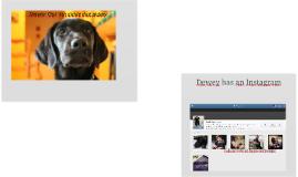 Dewey: Our 5th Guide Dog Puppy