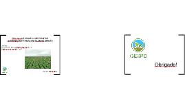 Plantas Daninhas em Sistema de Plantio Direto