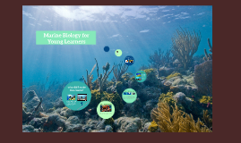 Mira Education - Marine Biology for Young Learners