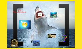 wens spreekbeurt Haaien