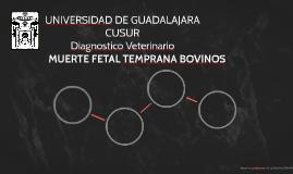 MUERTE FETAL TEMPRANA BOVINOS