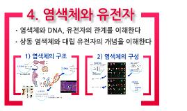 Copy of Copy of 생명과학1 염색체와 유전자