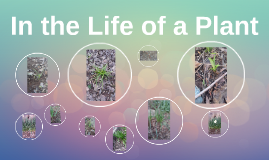 In the Life of a Plant