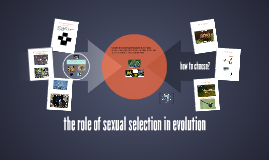 the role of sexual selection in evolution