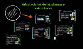 Adaptaciones de las plantas y estructuras