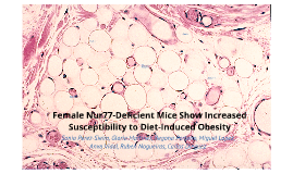 Female Nur77-Deficient Mice Show Increased Susceptibility to