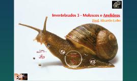 Copy of Invertebrados 3 - Moluscos e Anelídeos