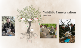 Wildlife Preservation