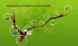 Copy of Adaptaciones de las plantas a la alta montaña