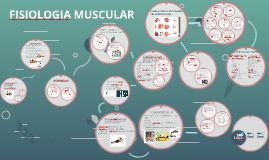Copy of FISIOLOGIA MUSCULAR