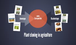 Plant cloning in agriculture