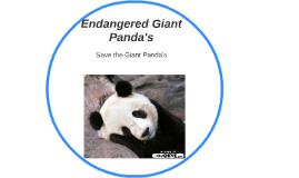 Endangered Giant Panda's