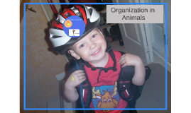 Organization in Animals