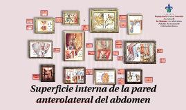 Superficie interna de la pared ant. lat. del abdomen