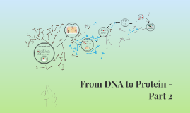 Copy of From DNA to Protein - Part 2