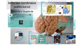 Arterias Cerebrales posteriores