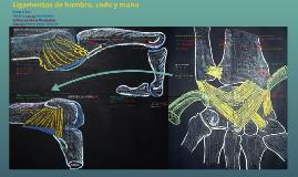 Ligamentos de hombro, codo y mano