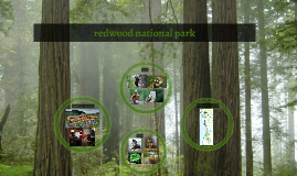 http://upload.wikimedia.org/wikipedia/commons/d/de/Redwood_N