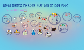 Ingredients to Look Out for in Dog Food