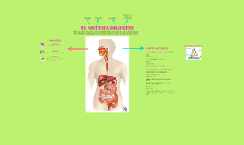 Sistema digestiu