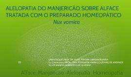 ALELOPATIA DO MANJERICÃO (Ocimum basilicum L.)  SOBRE ALFACE