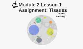 Module 2 Lesson 1 Assignment: Tissues