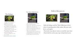 The kakapo and the thick billed parrot