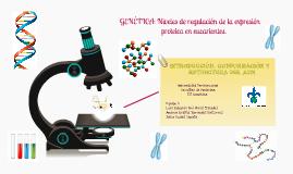INTRODUCCIÓN. Conformación y estructura del ADN